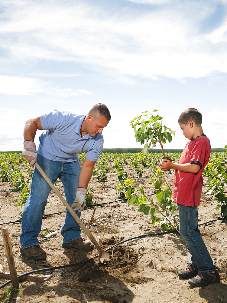 Father and son (8-9) planting trees in tree farm