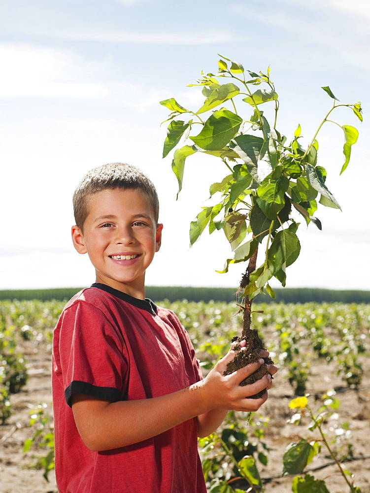 Boy (8-9) plating trees in tree farm