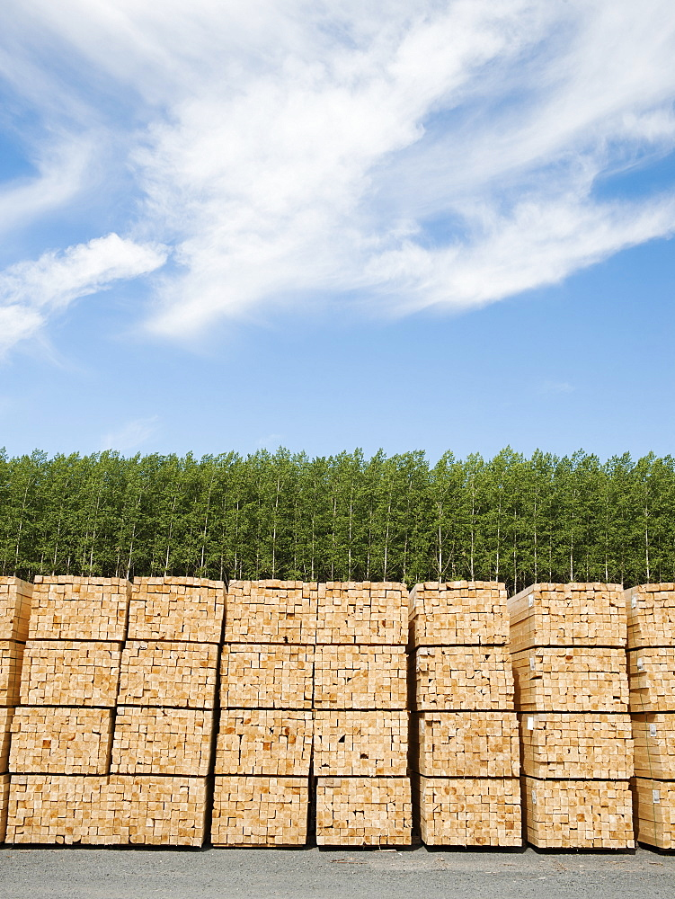 Orderly stacks of timber in timber plantation