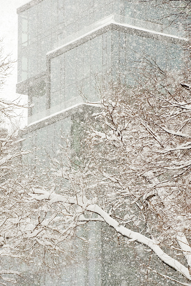 Snow covered tree branches, office building in background