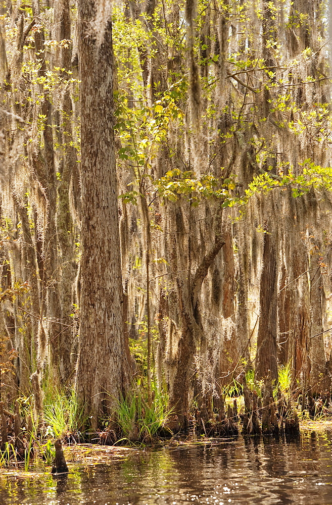 Honey Island Swamp in White Kitchen Nature Preserve