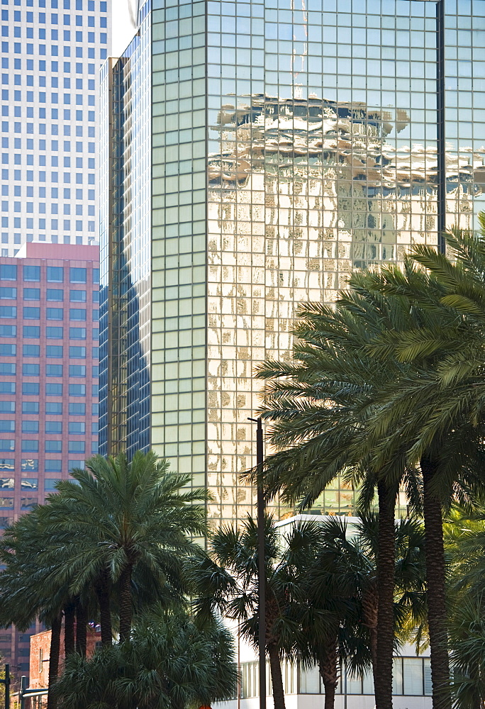 High-rise buildings and palm trees in New Orleans