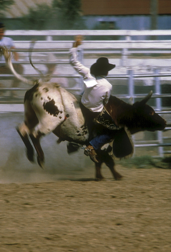 USA, Colorado, Rodeo rider in action