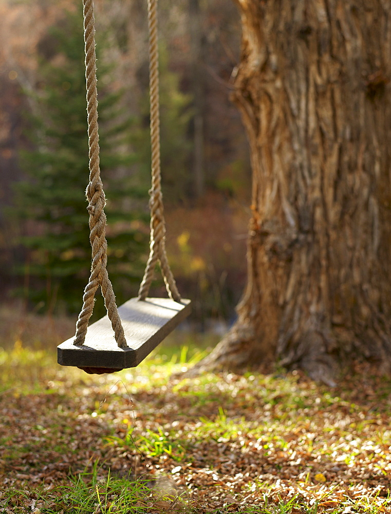 USA, Colorado, Empty swing hanging from tree