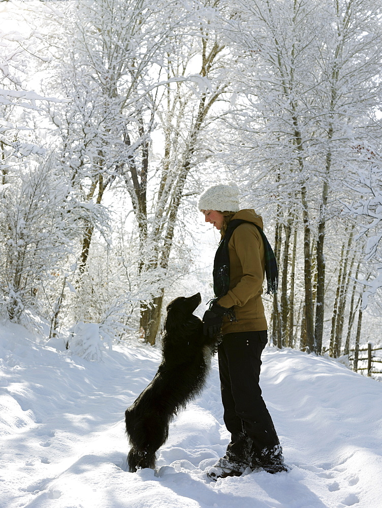 USA, Colorado, young woman playing with dog on snowy road