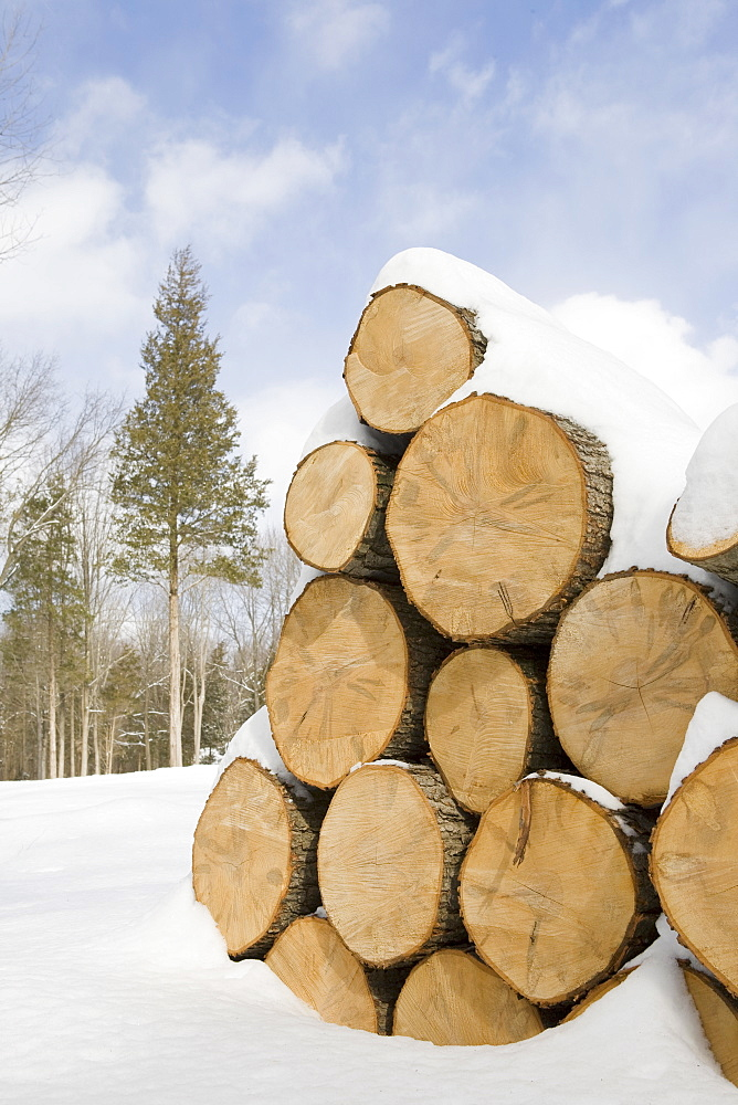 USA, New Jersey, Stack of timber in winter scenery