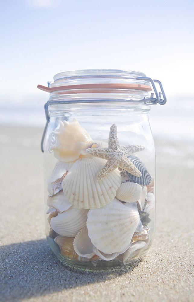USA, Massachusetts, close up of shells in jar