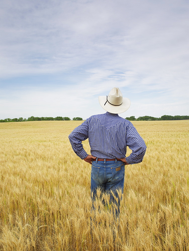 Farmer standing in wheat field