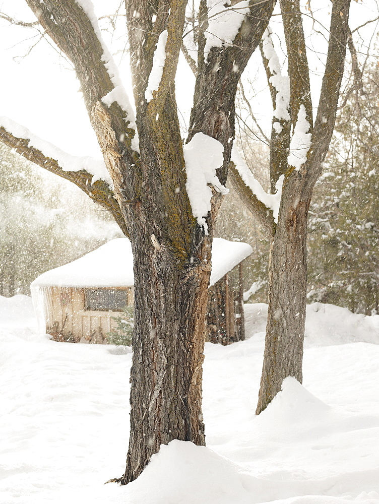 Trees and cabin on snowy day