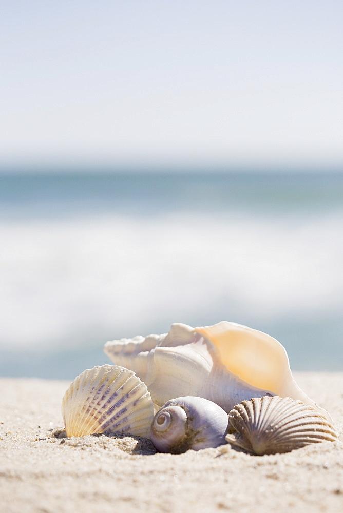 Beach shells
