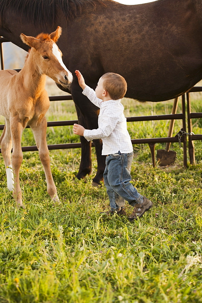 USA, Utah, Lehi, Boy (2-3) stroking foal