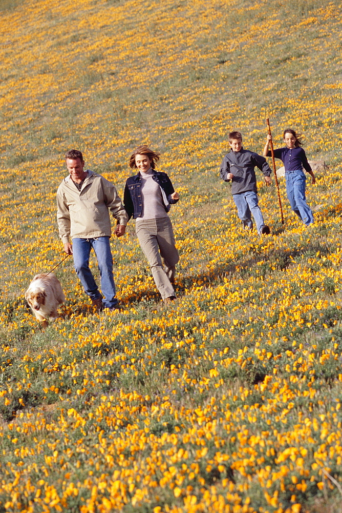 Family hiking in field of wildflowers