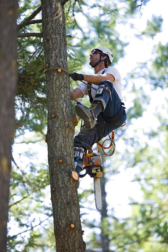 USA, Montana, Lakeside, lumberjack clambering tree