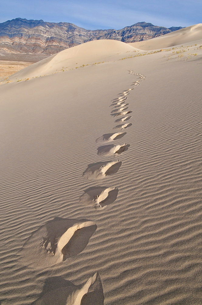 USA, California, Footprints of desert dune