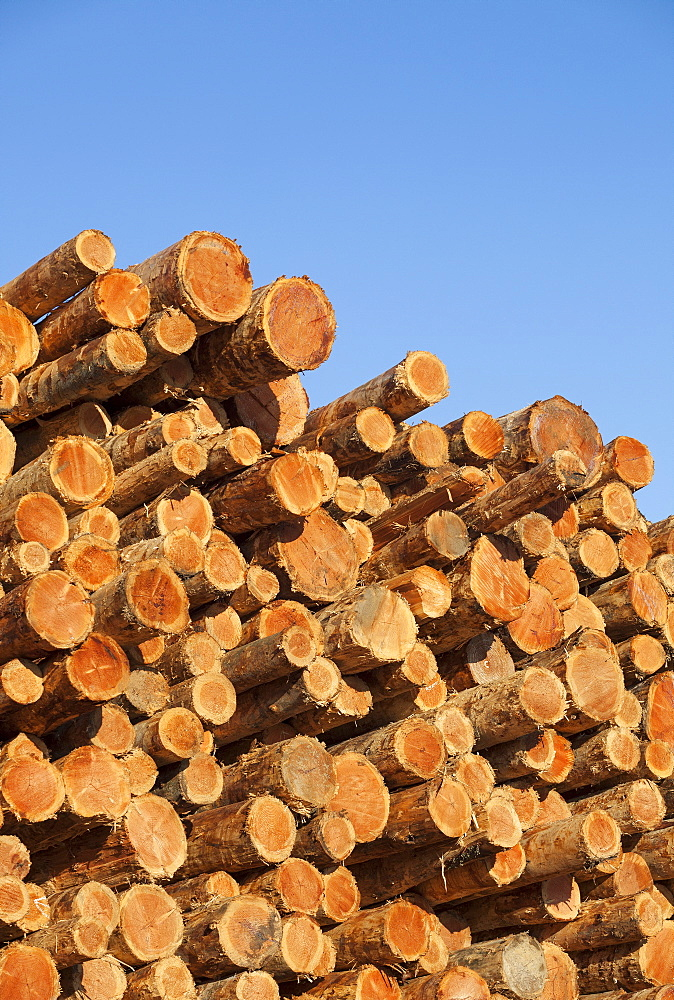 Stack of logs to be used for lumber, Coos Bay, Or