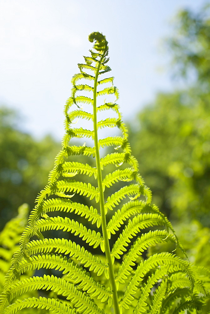 Detail of fern