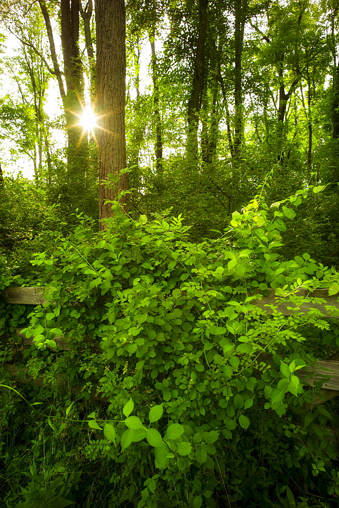 Green forest at sunrise, USA, New York State, New York City