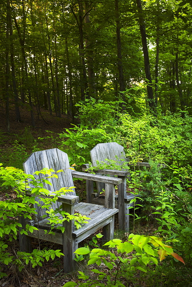 Wooden chairs in greenery, USA, New York State, New York City, Central Park