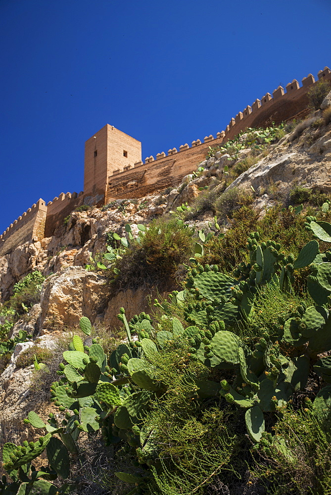 Cacti and fortified wall, Almeria, Spain