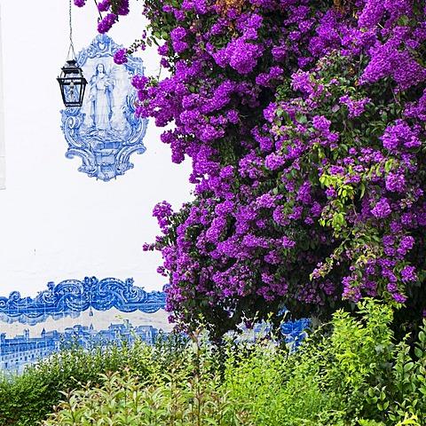 Purple flowers in front of tiled Santa Luzia Church facade, Lisbon, Portugal