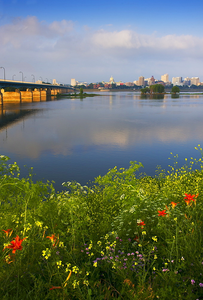 Wildflowers in front of Susquehanna River