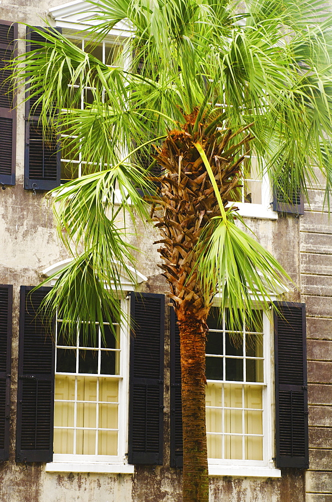 USA, South Carolina, Charleston, Palm tree in front of old house