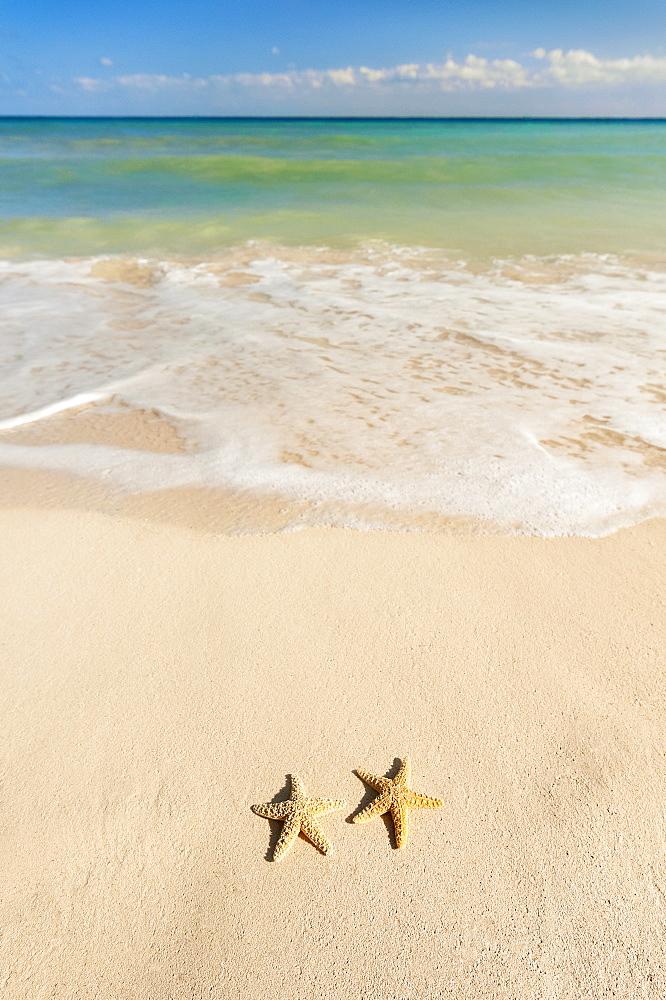 Two starfish on beach
