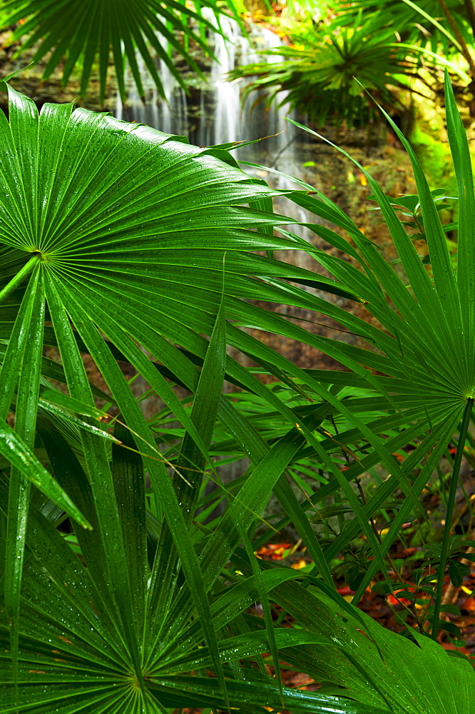 Palm leaves and waterfall