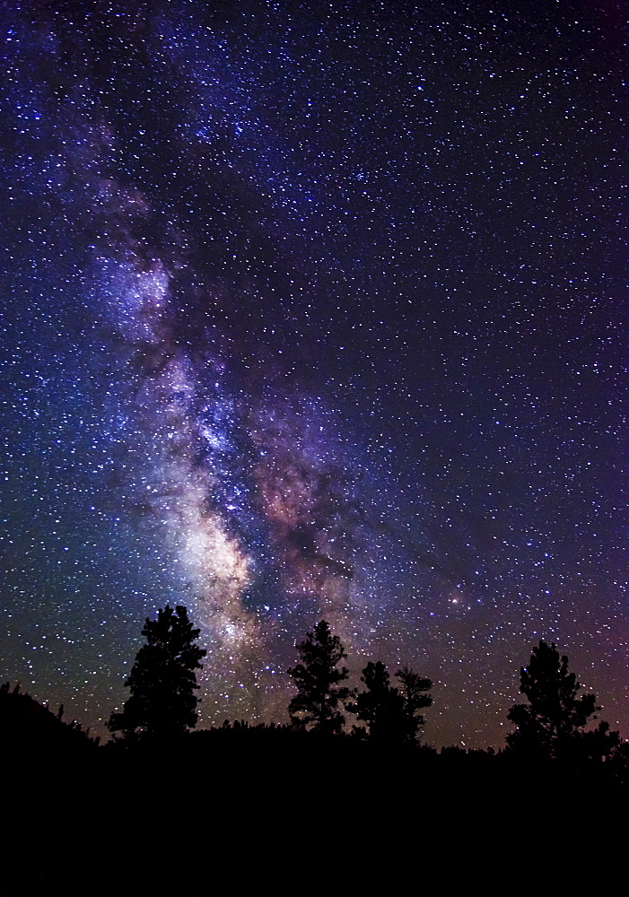 Milky Way and silhouetted trees, USA, Utah, Bryce Canyon