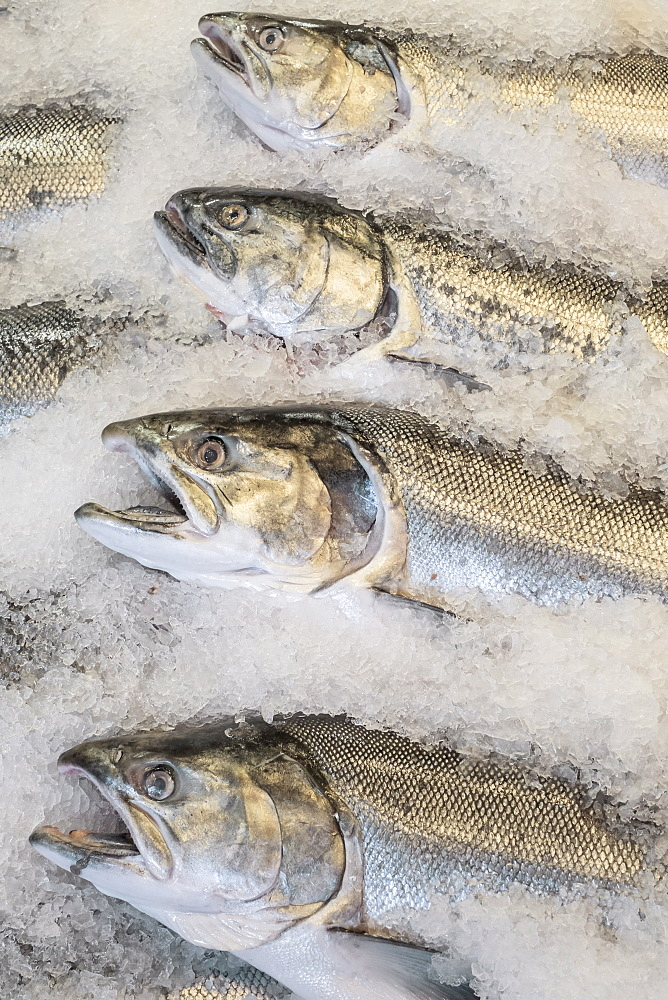 Close-up of fish on market stall