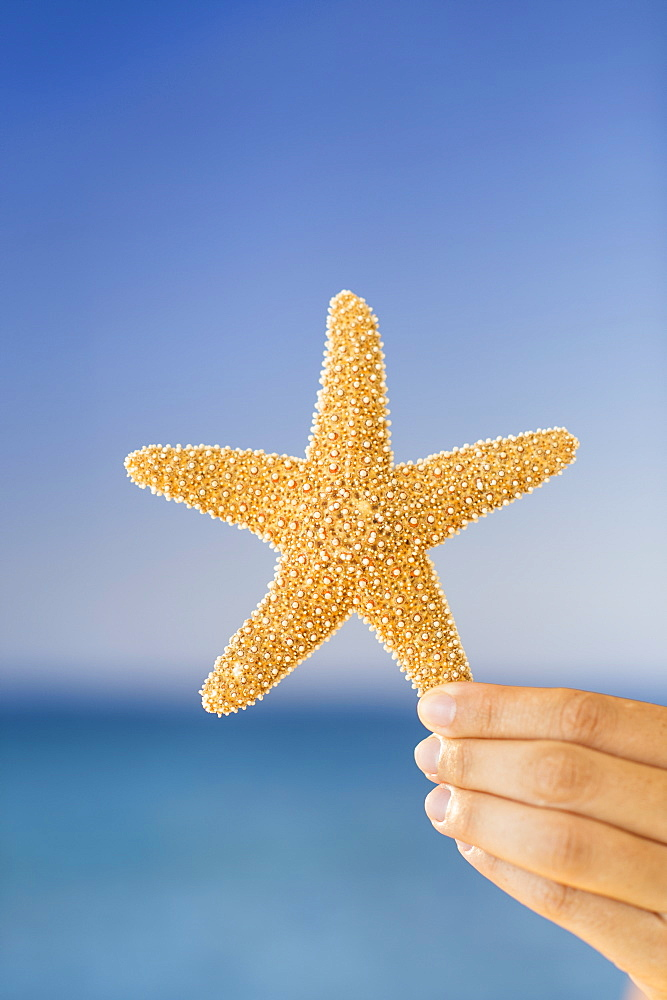 Close up of woman's hand holding starfish