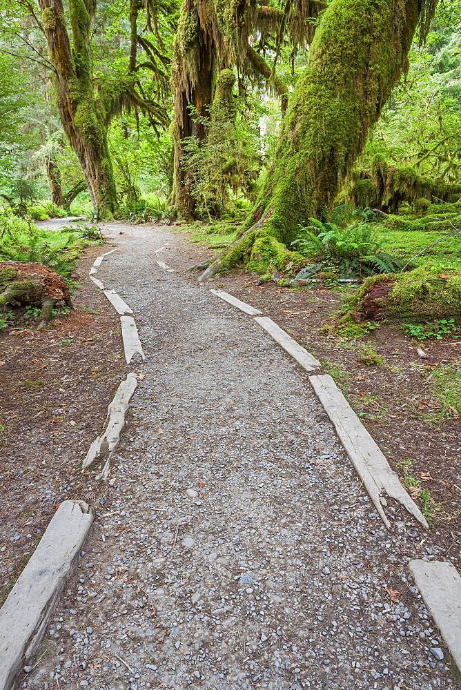 Path going through forest, Olympic National Park, Washington