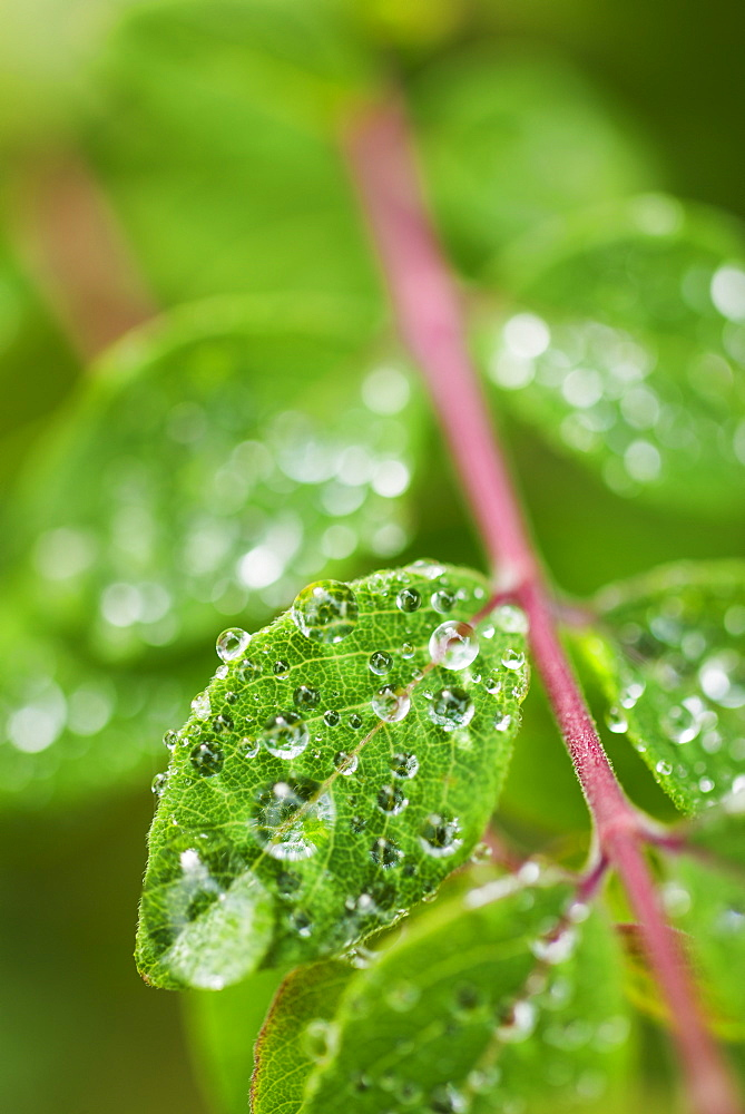 Close-up of droplets on leaf