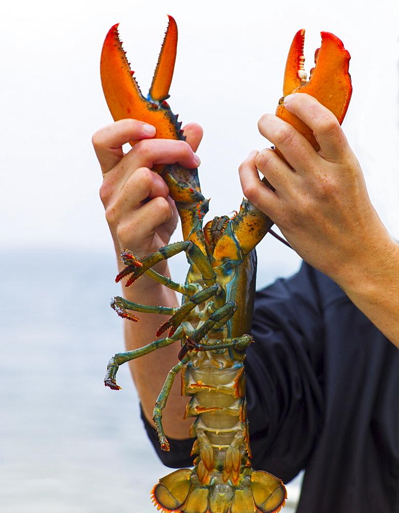 Man holding lobster, Portland, Maine