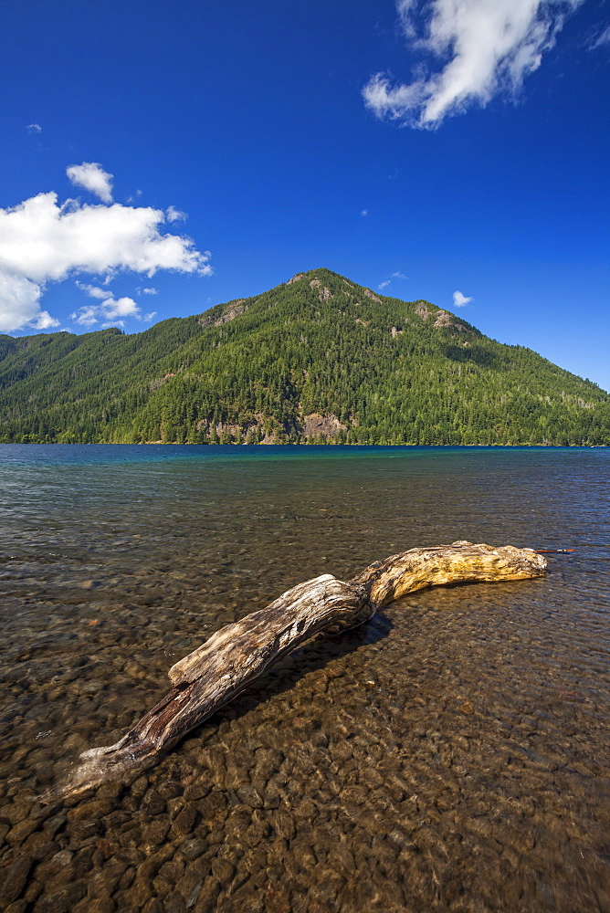Driftwood on shore of Lake Crescent, Olympic National Park, Washington
