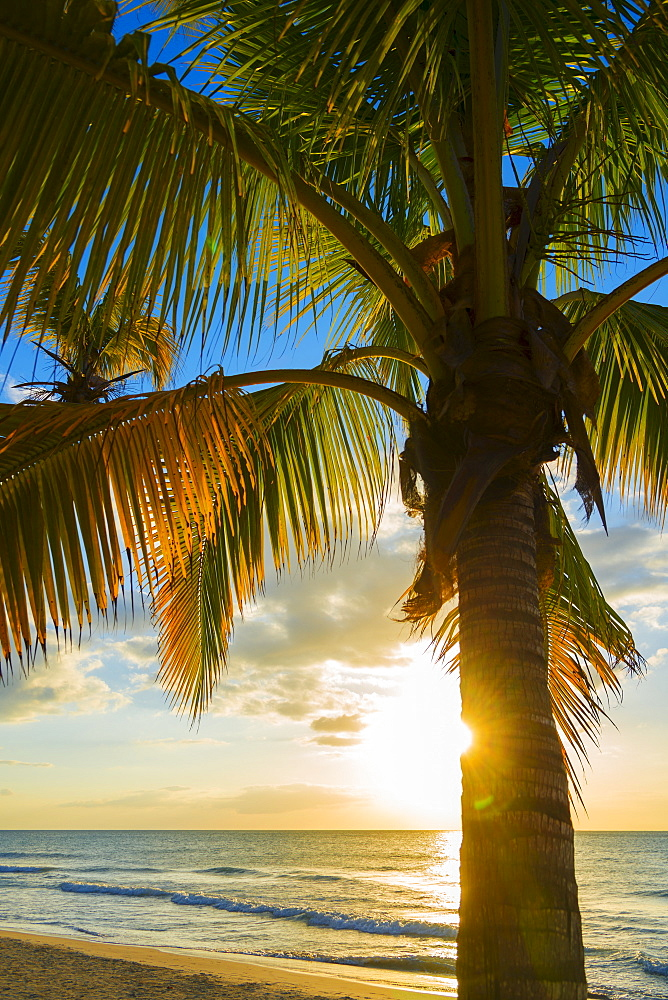 Palm tree on beach at sunset, Jamaica