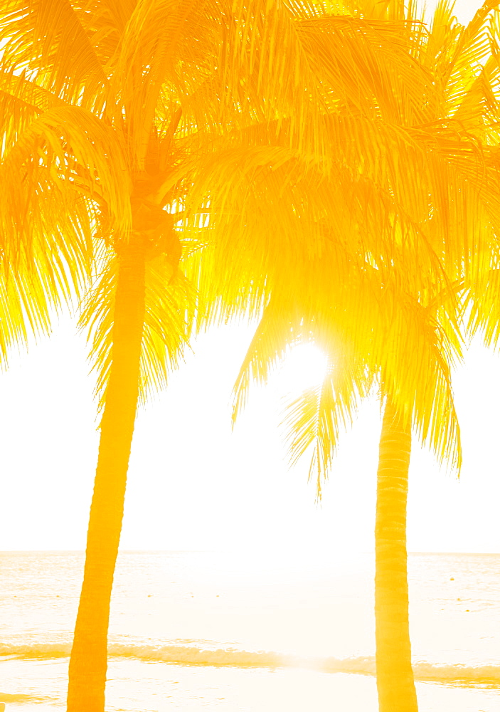 Silhouette of palm trees, Jamaica