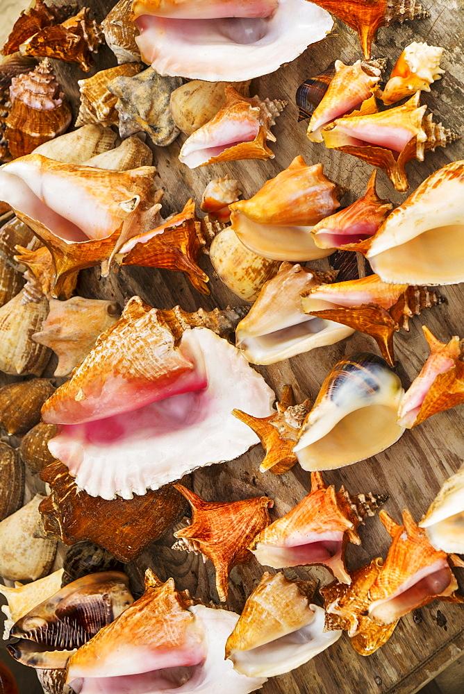 Sea shells for sale, Jamaica