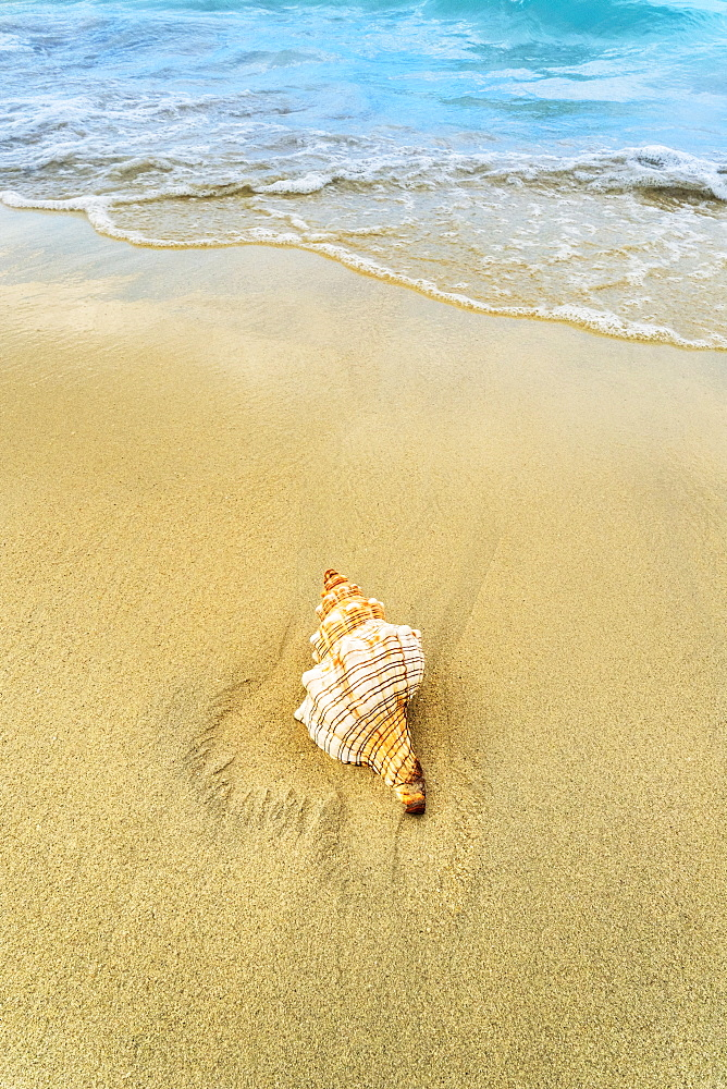 Shell on beach, Jamaica