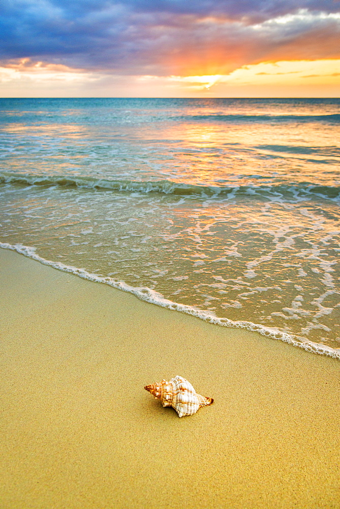 Shell on beach at sunset, Jamaica