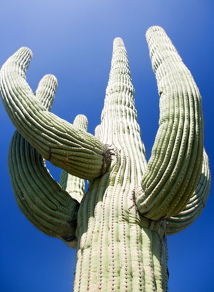 Low angle view of cactus, Arizona, United States