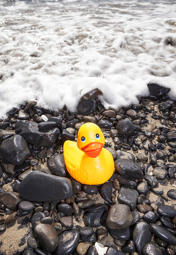 Oregon, Florence, Yellow plastic duck on sea shore