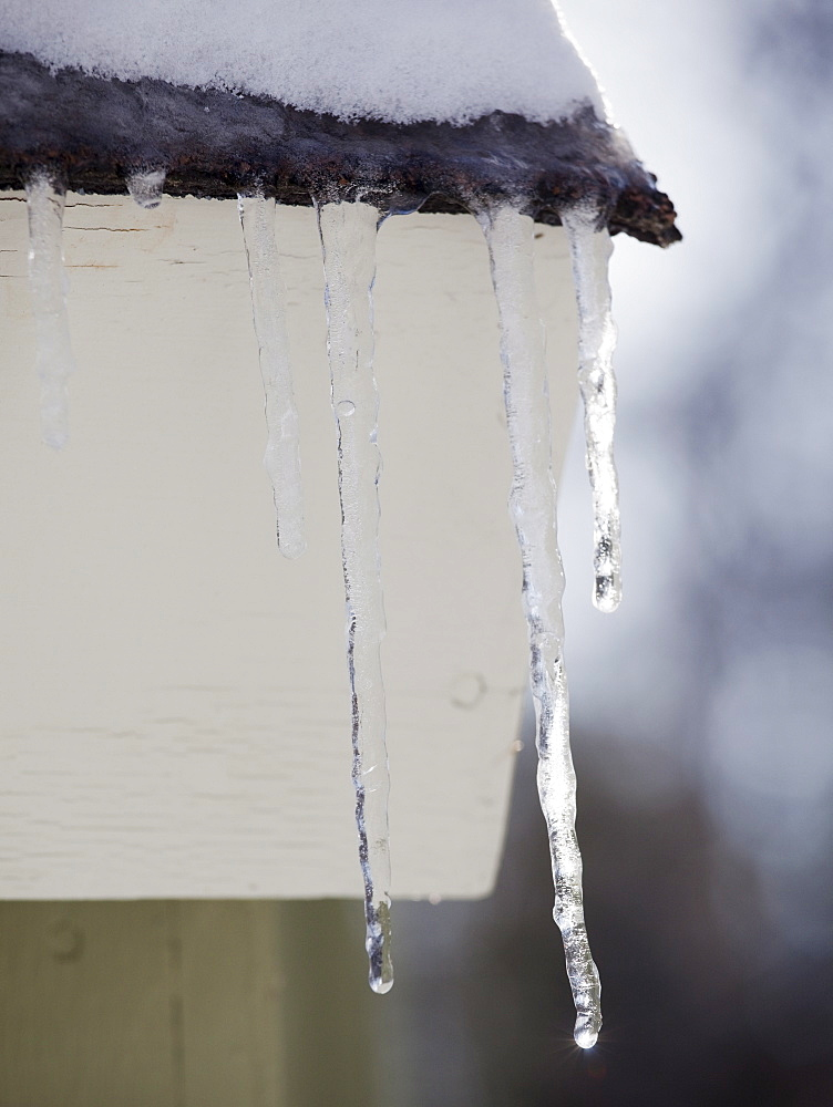 Icicles hanging from roof eaves