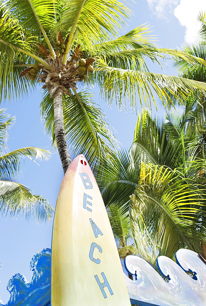 Surfboard and palm trees