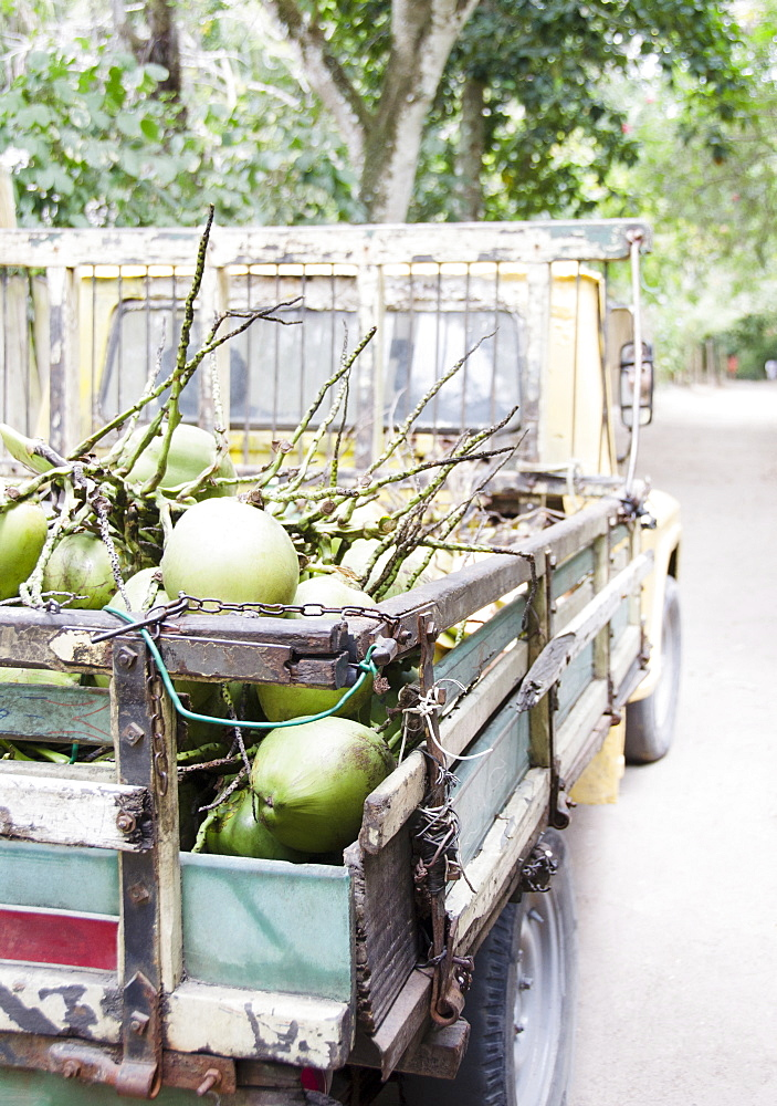 Brazil, Bahia, Trancoso, Fresh coconuts on back of pick-up truck