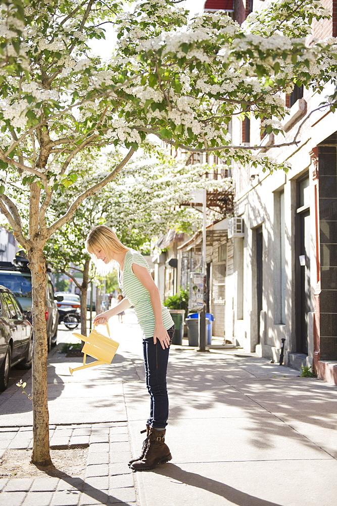 USA, New York, Williamsburg, Brooklyn, Woman watering tree on street