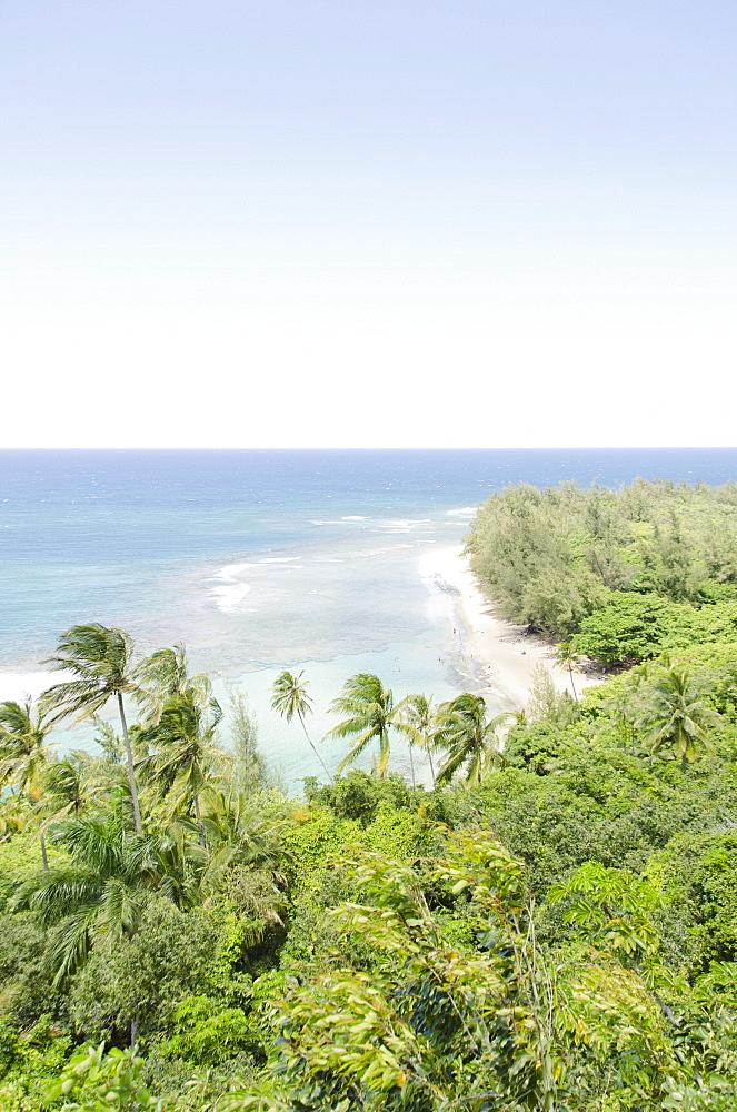 Palm trees on coast, USA, Hawaii, Kauai, Tunnels Beach, Kalalau Trail