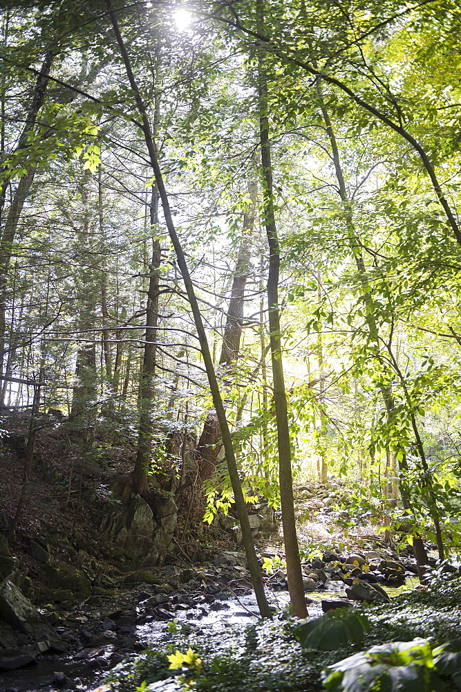 Forest, Newtown, Connecticut