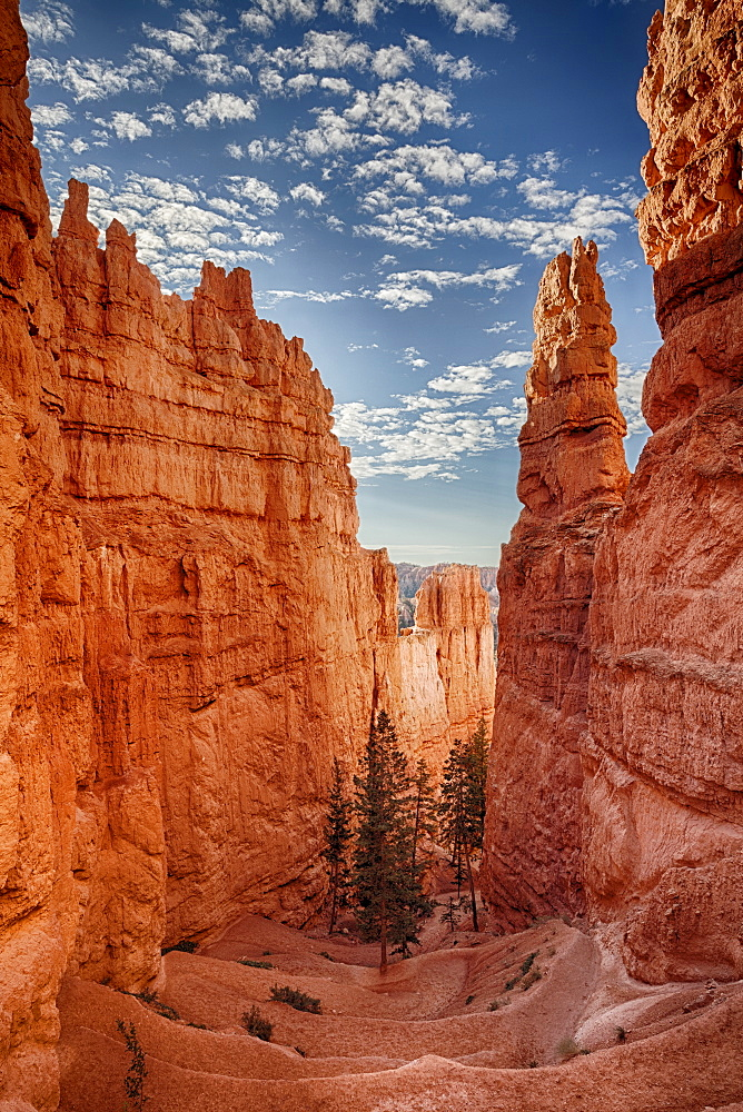 Navajo Trail, Navajo Trail in Bryce Canyon National Park, Utah