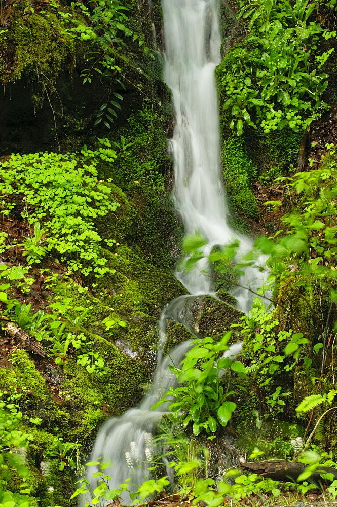 A scenic waterfall